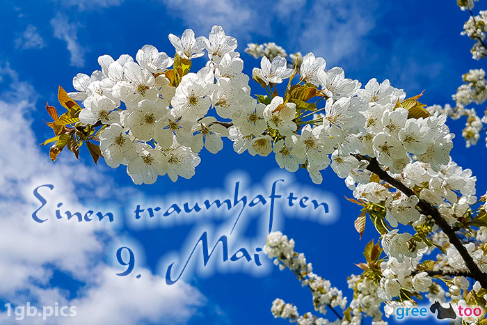 Kirschblueten Einen Traumhaften 9 Mai Bild - 1gb.pics