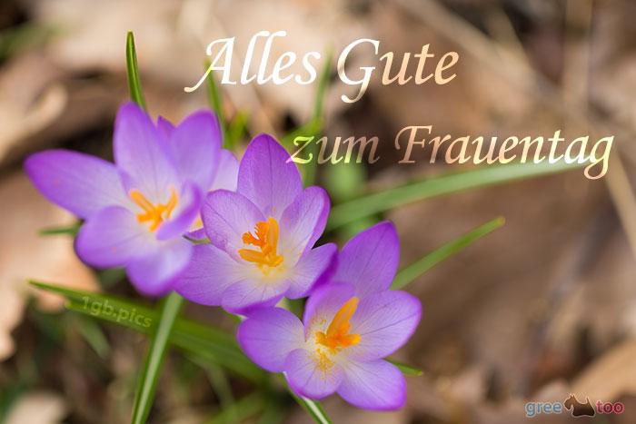 Alles Gute Frauentag Bild - 1gb.pics