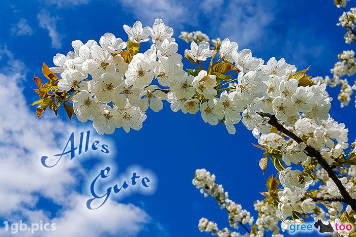 Kirschblueten Alles Gute Bild - 1gb.pics