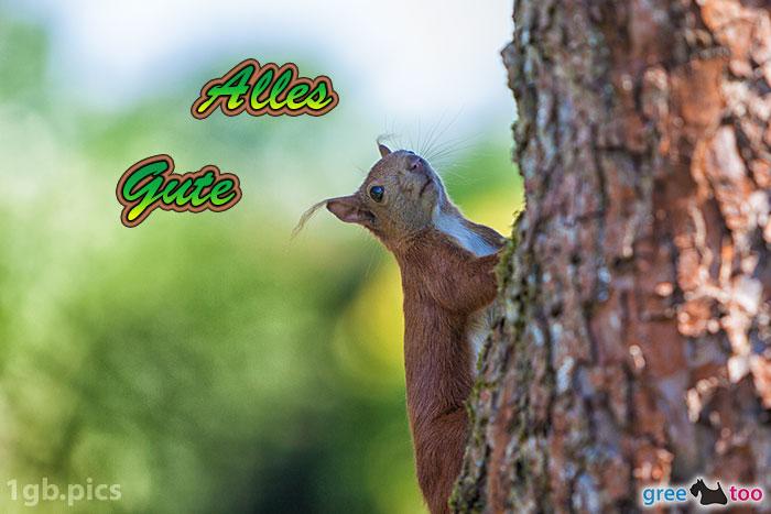 Eichhoernchen Alles Gute Bild - 1gb.pics