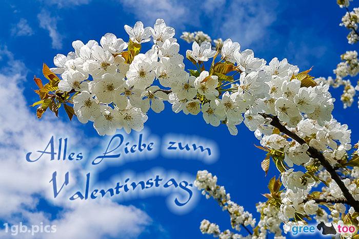 Kirschblueten Alles Liebe Zum Valentinstag Bild - 1gb.pics