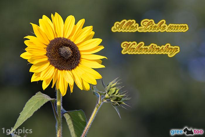 Sonnenblume Alles Liebe Zum Valentinstag Bild - 1gb.pics