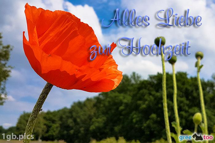 Mohnblume Alles Liebe Zur Hochzeit Bild - 1gb.pics