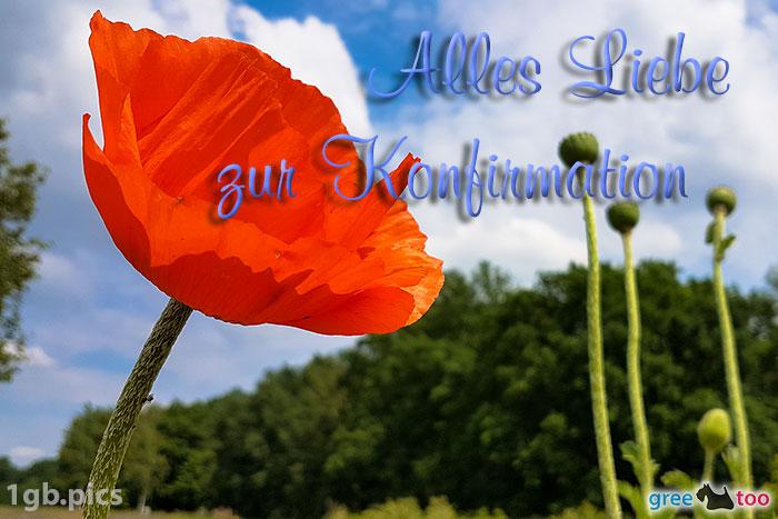 Mohnblume Alles Liebe Zur Konfirmation Bild - 1gb.pics