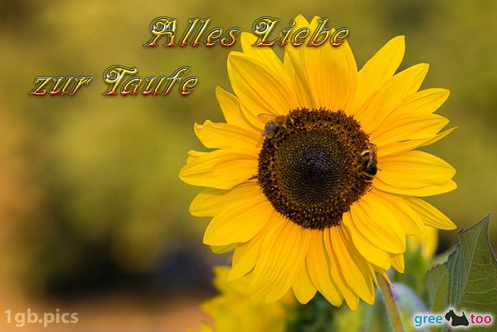 Sonnenblume Bienen Alles Liebe Zur Taufe Bild - 1gb.pics
