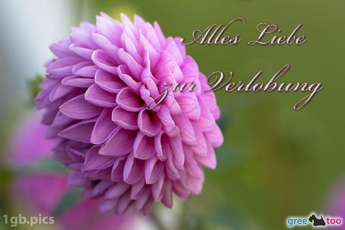 Lila Dahlie Alles Liebe Zur Verlobung Bild - 1gb.pics