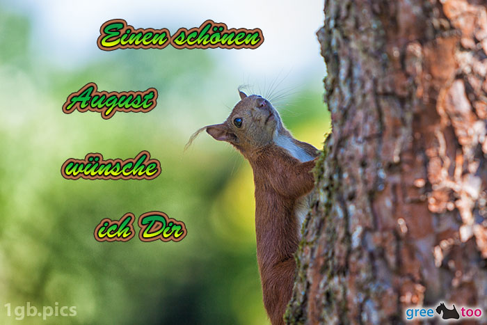 Eichhoernchen Einen Schoenen August Bild - 1gb.pics