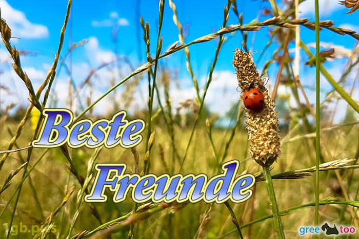 Marienkaefer Beste Freunde Bild - 1gb.pics