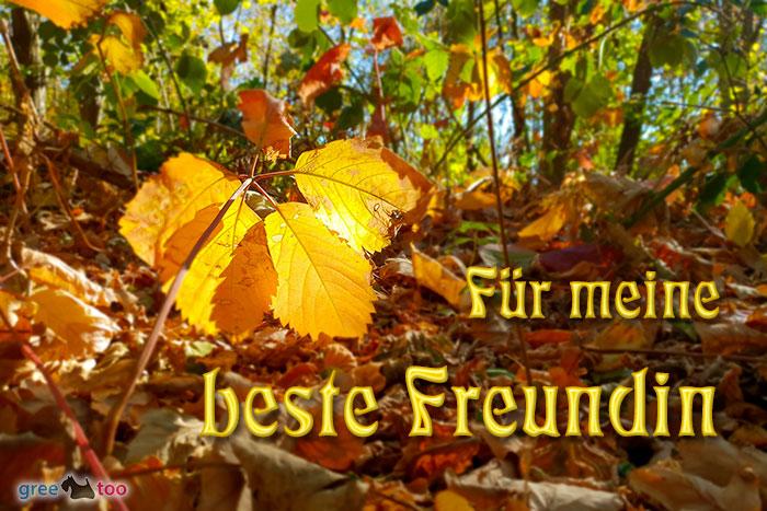 Fuer Meine Beste Freundin Bild - 1gb.pics