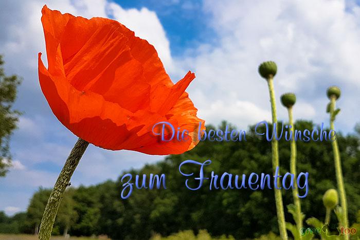 Die Besten Wuensche Zum Frauentag Bild - 1gb.pics