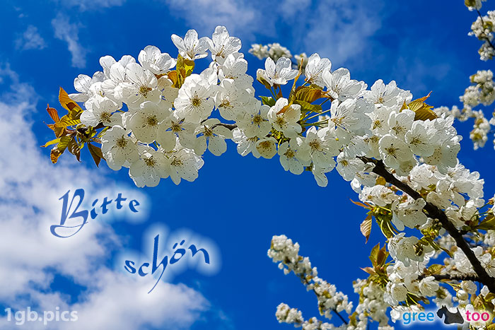 Kirschblueten Bitte Schoen Bild - 1gb.pics