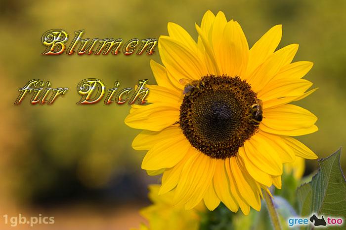 Sonnenblume Bienen Blumen Fuer Dich Bild - 1gb.pics