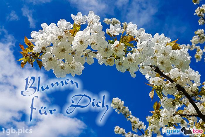 Kirschblueten Blumen Fuer Dich Bild - 1gb.pics