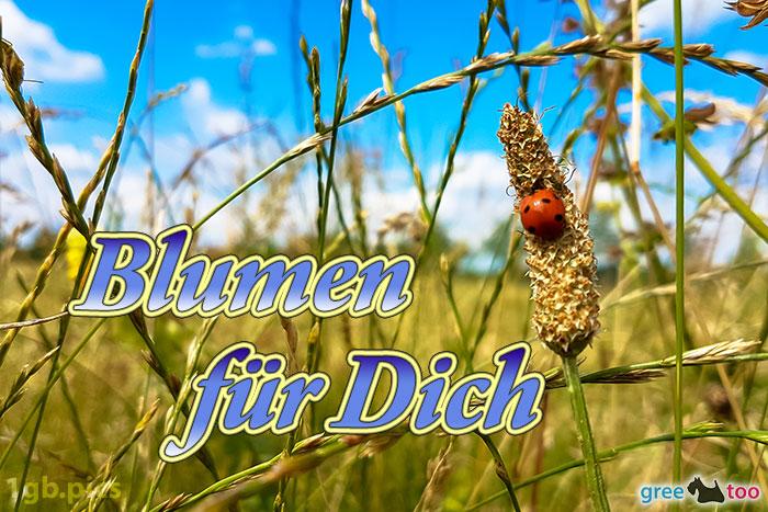 Marienkaefer Blumen Fuer Dich Bild - 1gb.pics