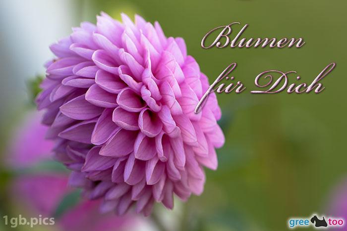 Lila Dahlie Blumen Fuer Dich Bild - 1gb.pics