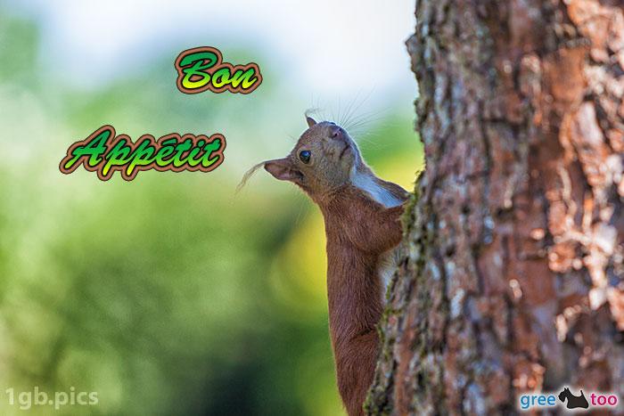 Eichhoernchen Bon Appetit Bild - 1gb.pics