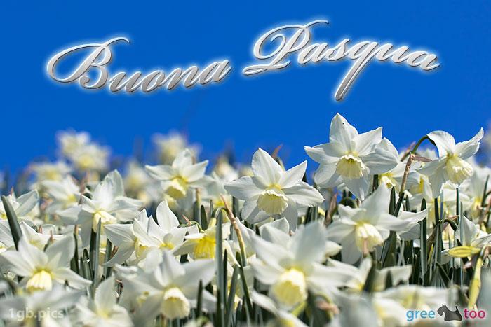 Buona Pasqua Bild - 1gb.pics