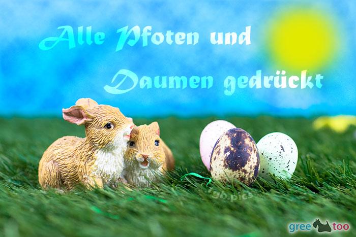 Pfoten Und Daumen Gedrueckt Bild - 1gb.pics
