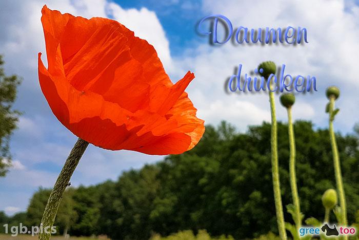 Mohnblume Daumen Druecken Bild - 1gb.pics