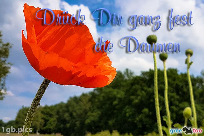 Mohnblume Drueck Dir Ganz Fest Die Daumen Bild - 1gb.pics