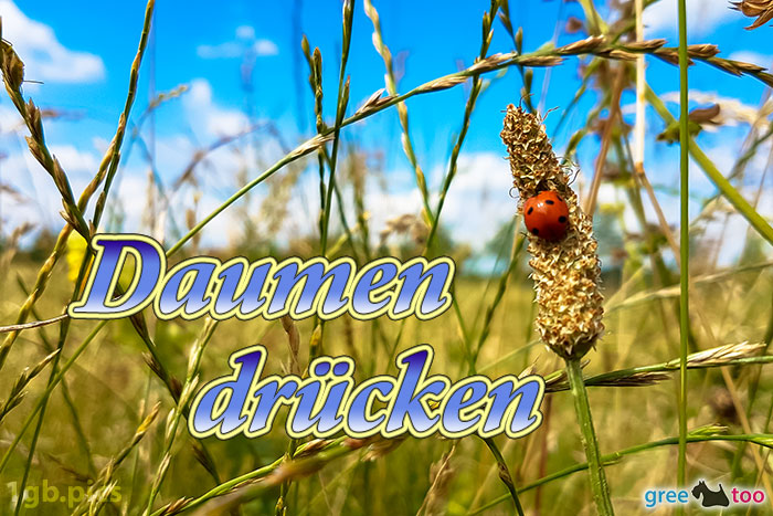 Marienkaefer Daumen Druecken Bild - 1gb.pics