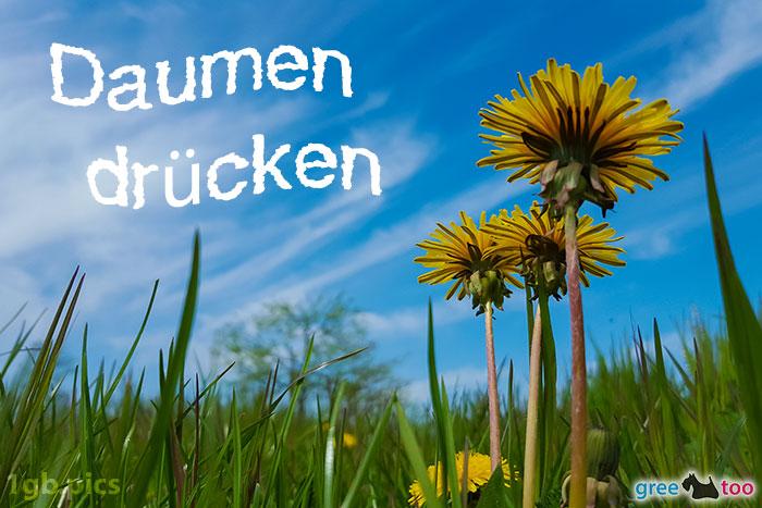 Loewenzahn Himmel Daumen Druecken Bild - 1gb.pics