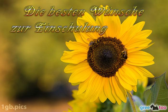 Sonnenblume Bienen Die Besten Wuensche Zur Einschulung Bild - 1gb.pics