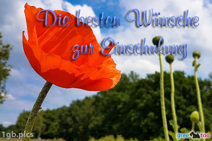 Mohnblume Die Besten Wuensche Zur Einschulung Bild - 1gb.pics