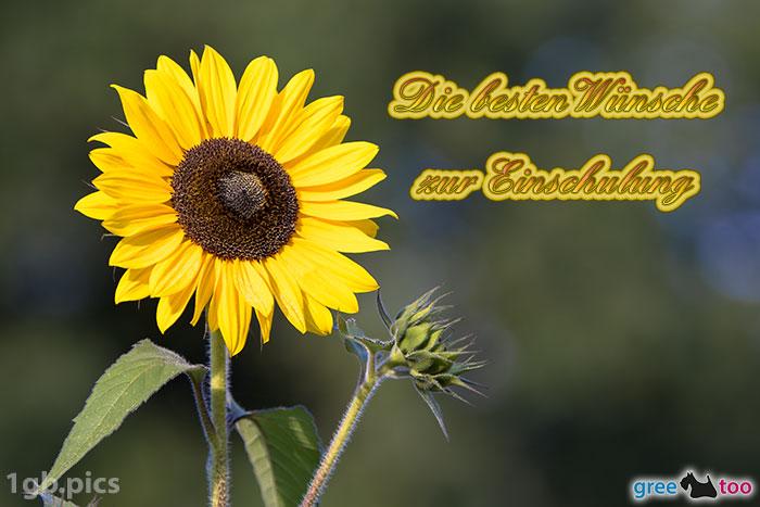 Sonnenblume Die Besten Wuensche Zur Einschulung Bild - 1gb.pics