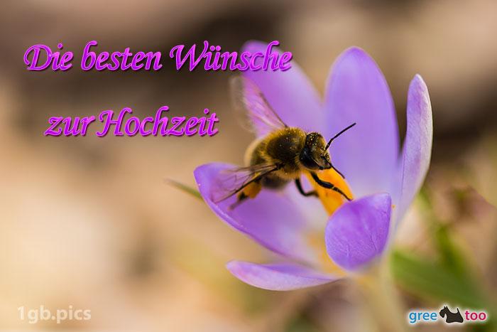 Krokus Biene Die Besten Wuensche Zur Hochzeit Bild - 1gb.pics
