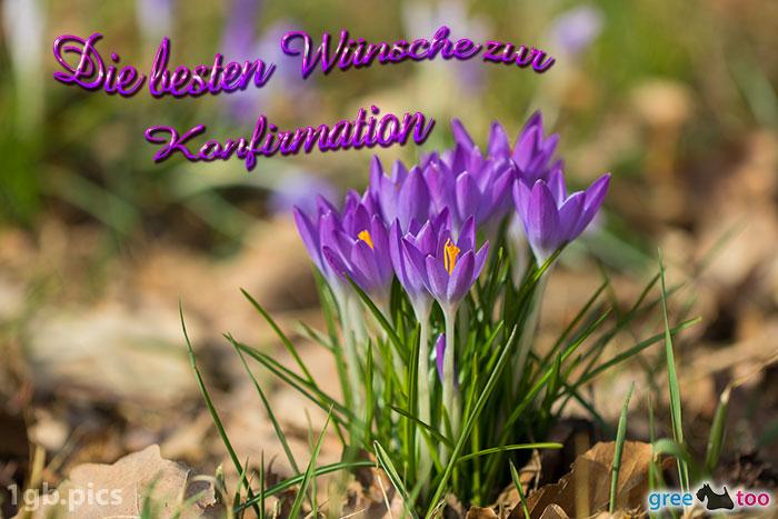 Krokusstaude Die Besten Wuensche Zur Konfirmation Bild - 1gb.pics