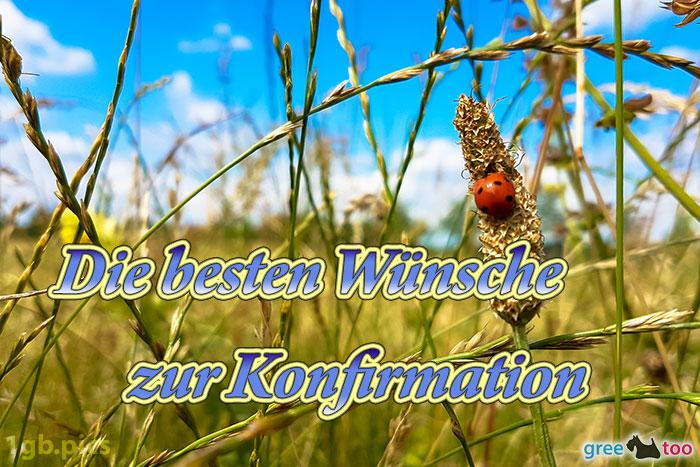 Marienkaefer Die Besten Wuensche Zur Konfirmation Bild - 1gb.pics
