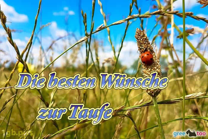 Marienkaefer Die Besten Wuensche Zur Taufe Bild - 1gb.pics
