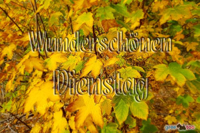 Wunderschoenen Dienstag Bild - 1gb.pics
