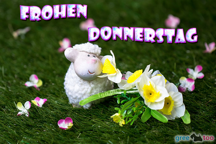 Frohen Donnerstag Bild - 1gb.pics