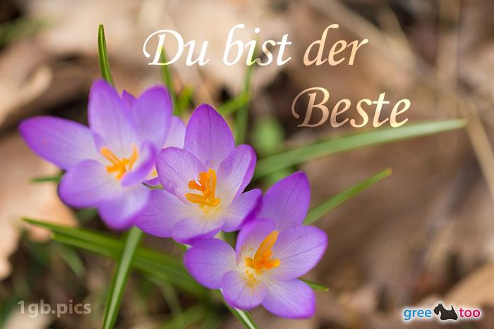 Lila Krokus Du Bist Der Beste Bild - 1gb.pics