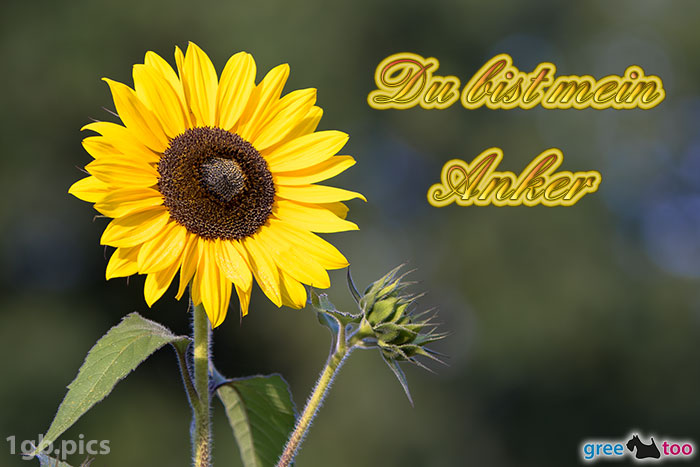 Sonnenblume Du Bist Mein Anker Bild - 1gb.pics