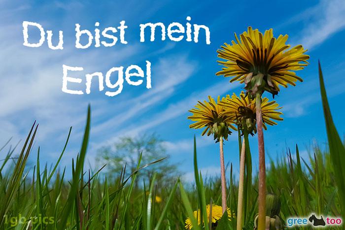 Loewenzahn Himmel Du Bist Mein Engel Bild - 1gb.pics