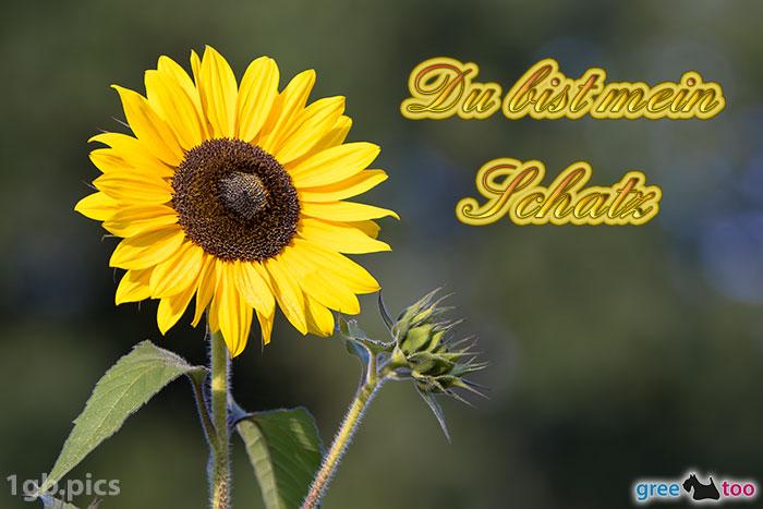 Sonnenblume Du Bist Mein Schatz Bild - 1gb.pics