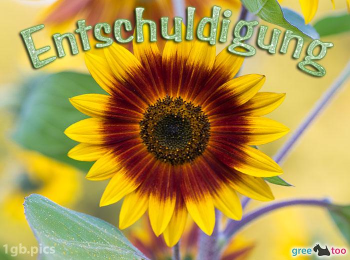 Sonnenblume Entschuldigung Bild - 1gb.pics