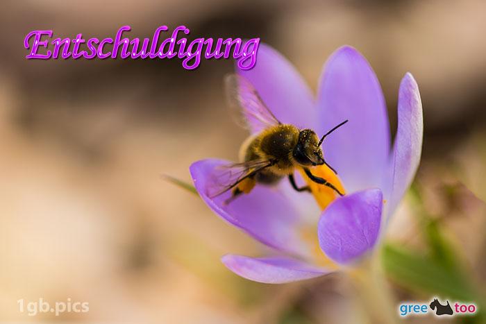 Krokus Biene Entschuldigung Bild - 1gb.pics