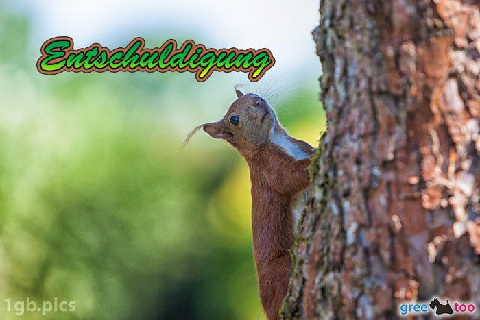 Eichhoernchen Entschuldigung Bild - 1gb.pics