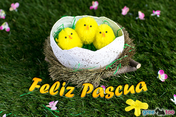 Feliz Pascua Bild - 1gb.pics