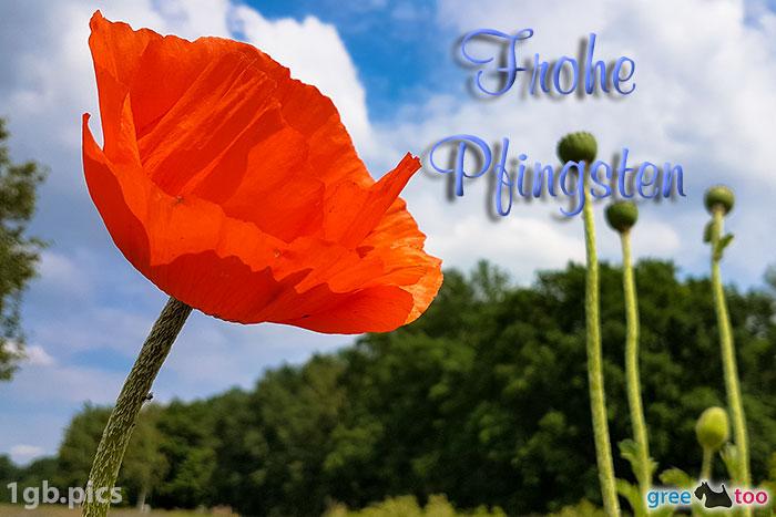 Mohnblume Frohe Pfingsten Bild - 1gb.pics
