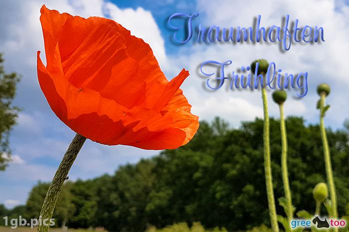 Mohnblume Traumhaften Fruehling Bild - 1gb.pics
