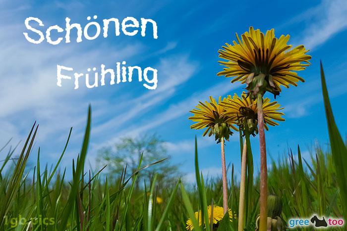 Loewenzahn Himmel Schoenen Fruehling Bild - 1gb.pics