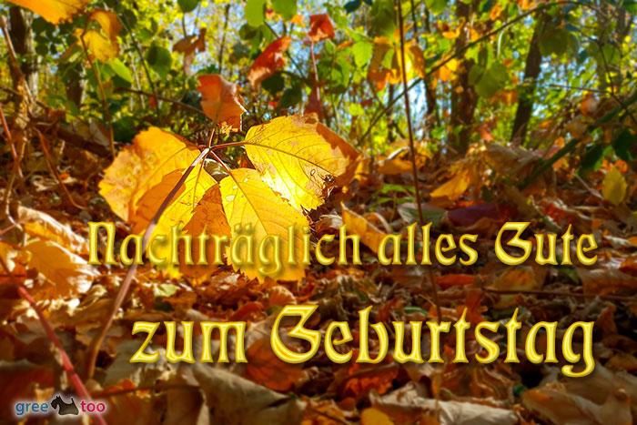 Nachtraeglich Alles Gute Zum Geburtstag Bild - 1gb.pics