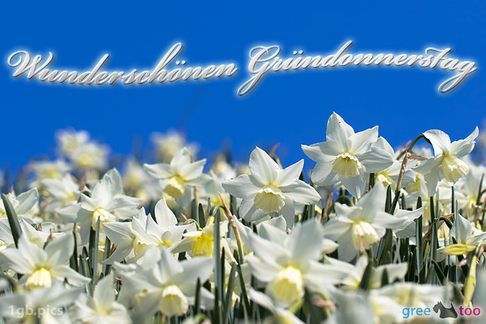 Wunderschoenen Gruendonnerstag Bild - 1gb.pics