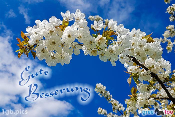 Kirschblueten Gute Besserung Bild - 1gb.pics