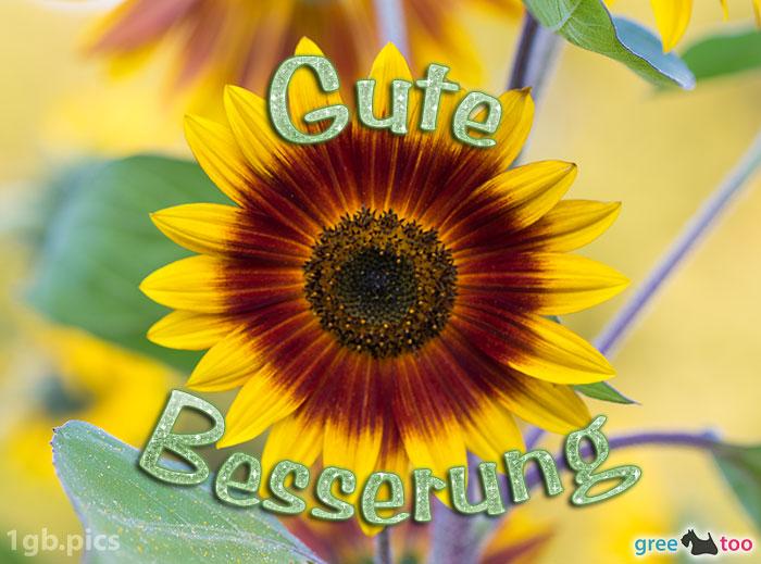 Sonnenblume Gute Besserung Bild - 1gb.pics